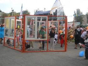 День города в Вольнянске